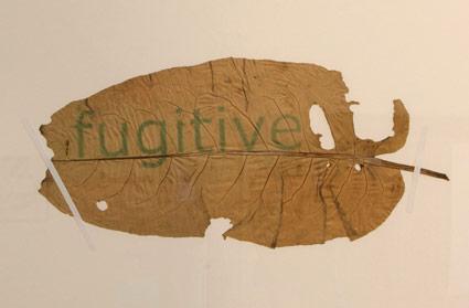 Fugitive - series of prints
